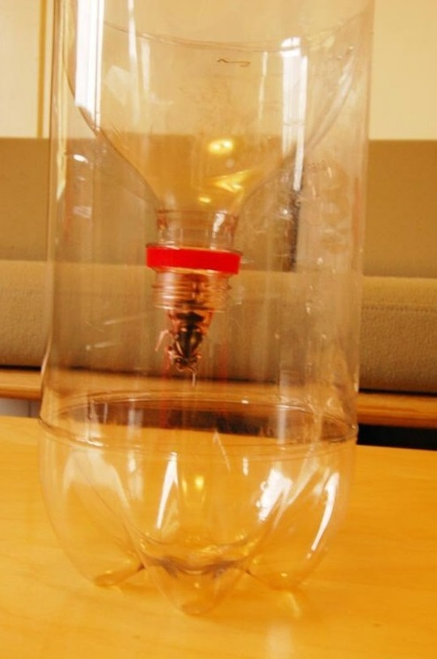 Perangkap Serangga Dari Botol Plastik Bekas