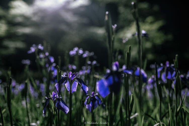 Bunga Cantik Di Musim Hujan