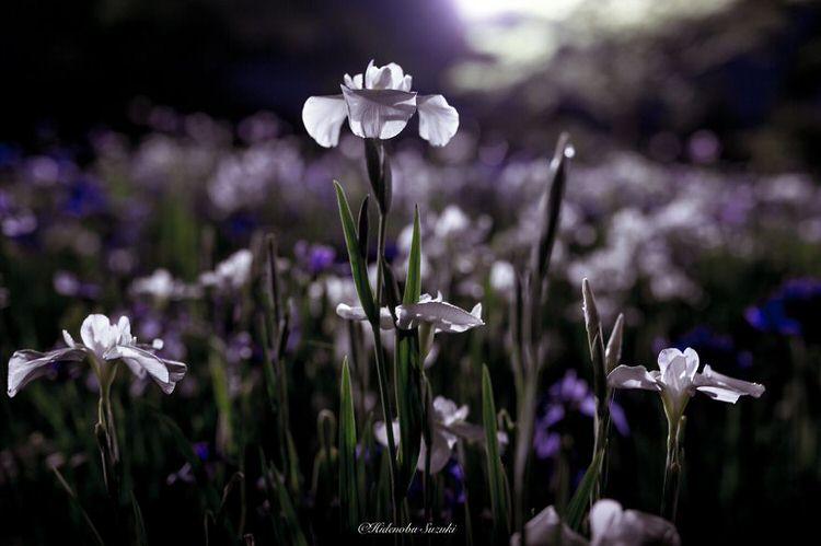 Bunga Yang Basah Terkena Hujan