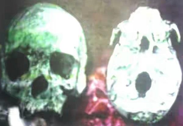 Fosil Homo Wajakensis Atau Manusia Dari Wajak