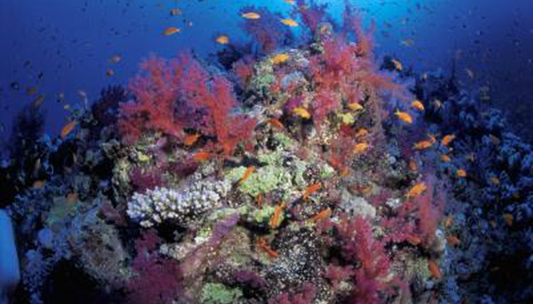 Apa itu Benthos? Definisi, Tipe, Contoh, dan Peran Organisme Bentos di Perairan
