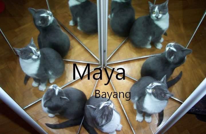Maya Artinya Bayang