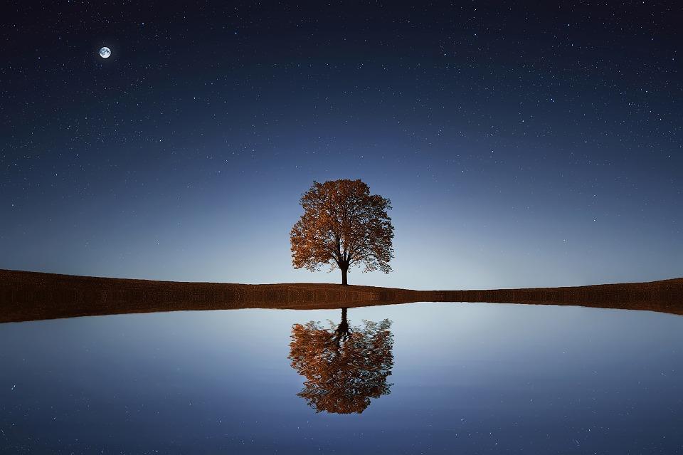Pemdanngan Indah Refleksi Pohon Di Tengah Danau