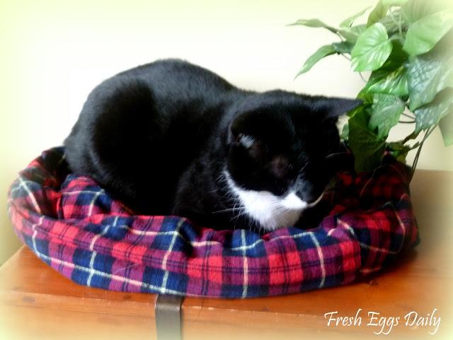 Selimut Tidur Kucing Dari Kain Flanel Via Www.fresheggsdaily.com
